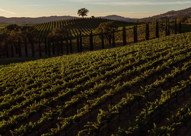 North Coast Wine Co.   Reserve Cabernet Sauvignon