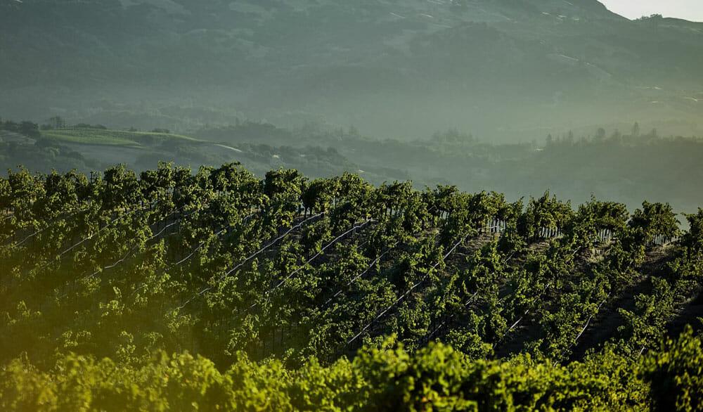 North Coast Wine Co.   Cabernet Sauvignon